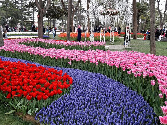 beautiful Istanbul tulips festival Emirgan Park