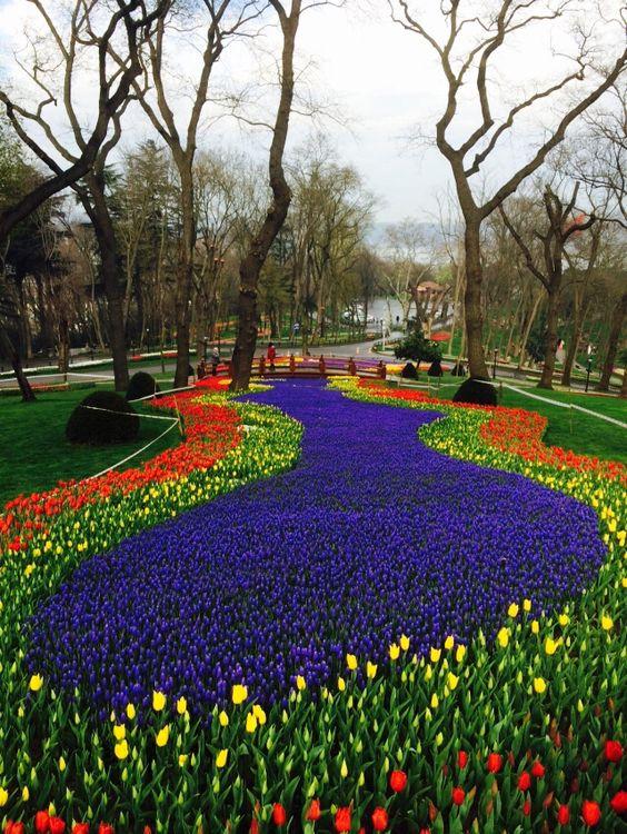 Tulips in Emirgan park Istanbul,Turkey